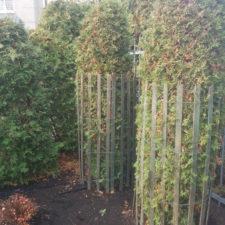 Aménagement de jardin à Bois-des-Fillions - Vert l